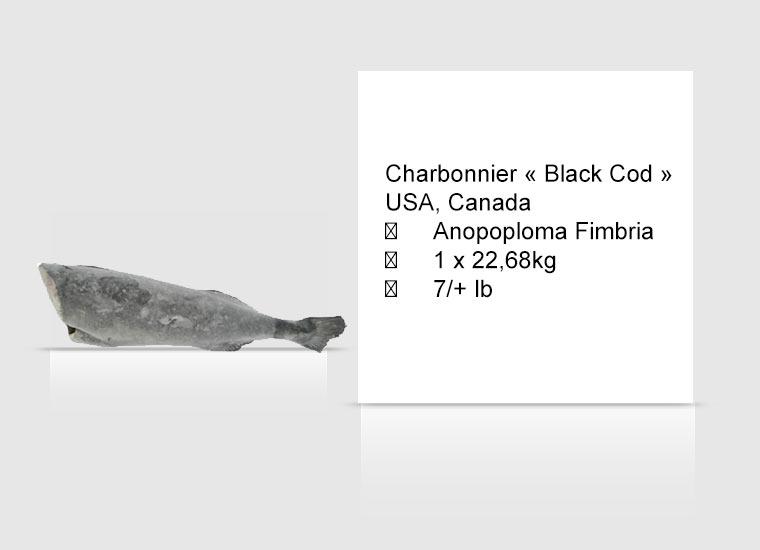 Charbonnier « Black Cod » USA, Canada
