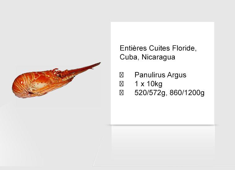 Entières Cuites Floride, Cuba, Nicaragua